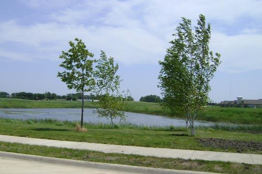 hawthorn-park-pond-large
